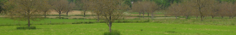 /bandeaux/bandeau-agroforesterie-noyers-perigord.jpg